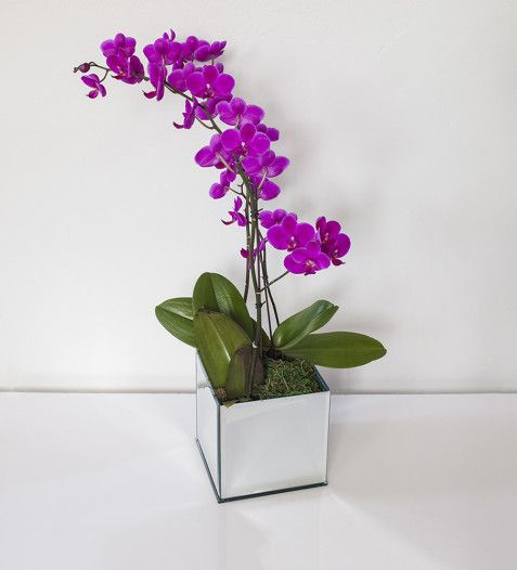 BUY NOW | Capri Orchid | Sorrento Events Online Shop
