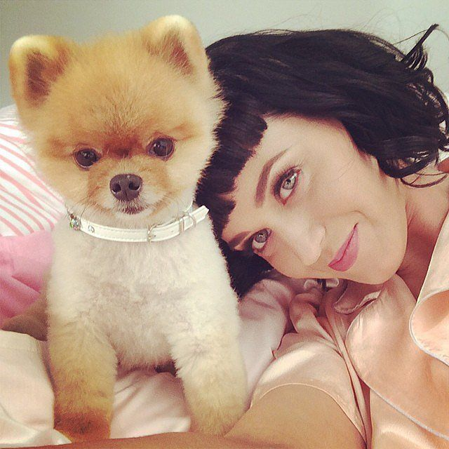 Best Jiff Pom Images On Pinterest Dogs Celebrity And Jokes - Jiff the pomeranian is easily the best dressed model on instagram