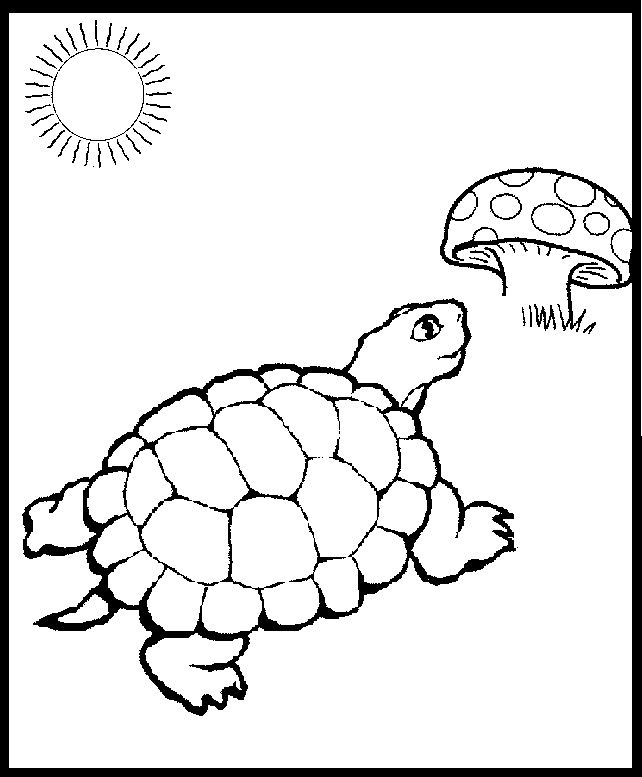 Eastern Box Turtle Coloring Page Turtle Coloring Pages Turtle