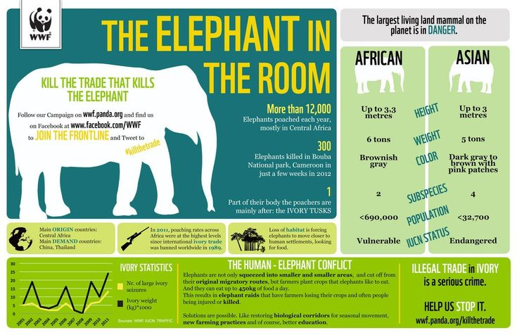 SavingSpecies » Top 10 Biodiversity Conservation Infographics - Infographic showing conservation status of elephants