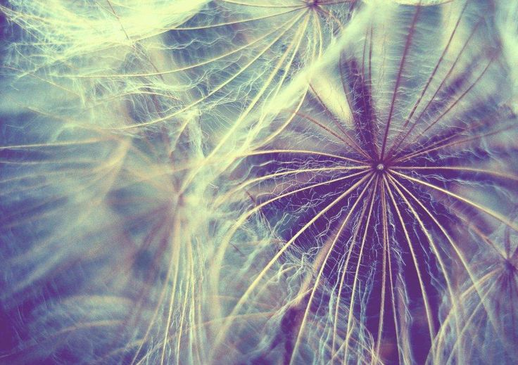 "Title: ""Light as air II"". Dandelion"