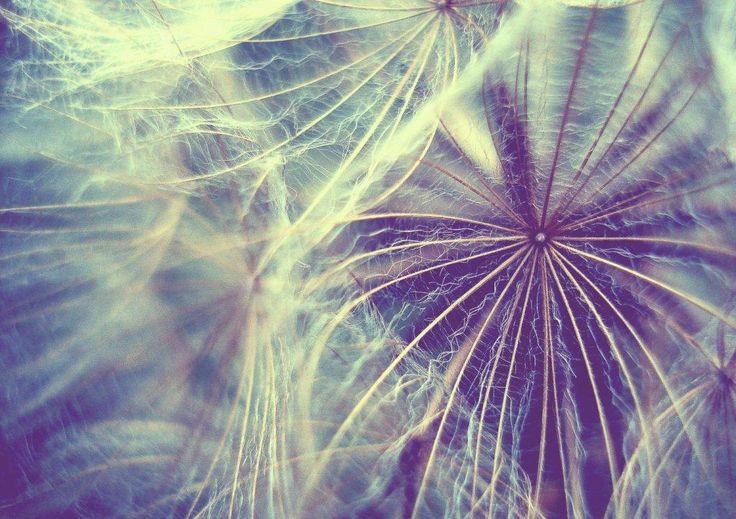 "Title: ""Light as air II"". Dandelion"