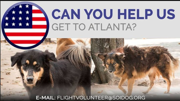 Please help us get adopted dogs to their homes! If you are traveling FROM Thailand TO the USA, on BOOKED tickets with Thai Airways, All Nippon Airways (ANA), China Airlines, Qatar, Korean Air, JAL, EVA, Asiana, Air France, Lufthansa or KLM, please EMAIL flightvolunteer@soidog.org for more information. https://www.soidog.org/content/become-flight-volunteer