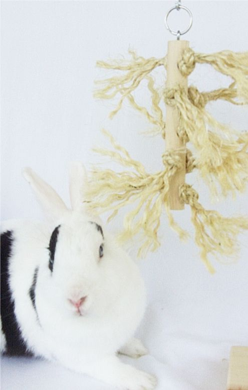 Fuzzy Log Rabbit Toys - Natural : Pet Rabbit Toys, Homemade Toys for Rabbits $8.97; with a tp roll- no drilling!