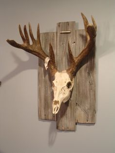 love this mount! adding wood...love the character it adds.and i love the shell at the top, very subtle!