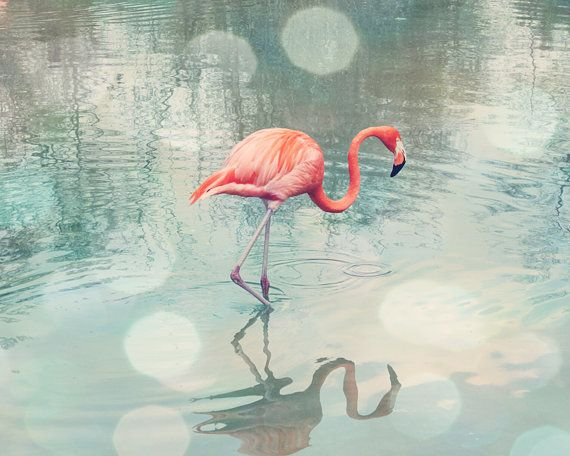 flamingo print coral wall art bathroom wall decor bird photography flamingo art teal bedroom