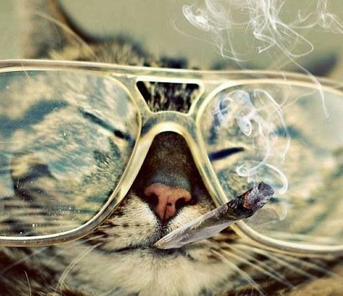 #legalize #marijuana #smoking