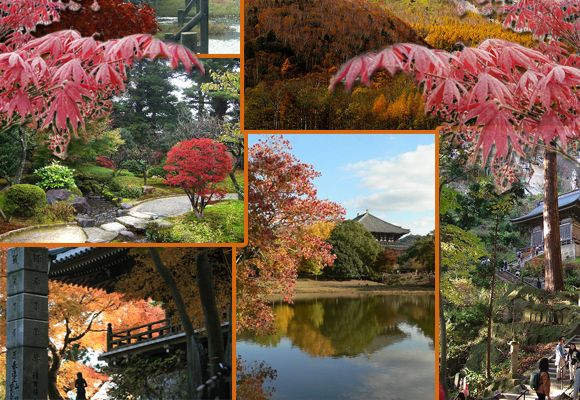The 10 best places in Japan for autumnleaves
