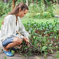 Growing Winter Greens and Salad Crops - Articles