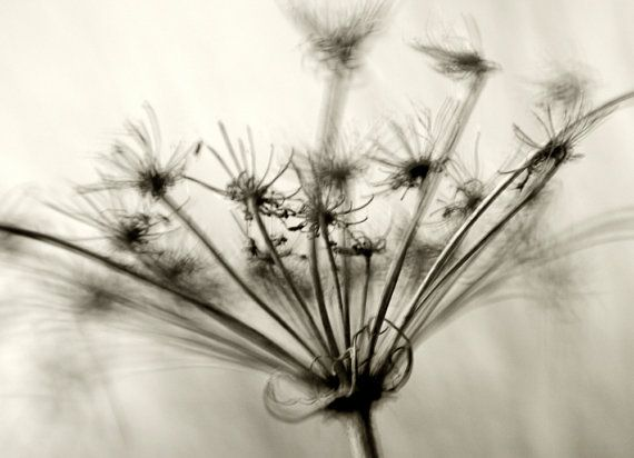 Black and White Queen Anne's Lace Photography, Sepia Toned Flower Print, Abstract Queen Anne's Lace Photo, Wall Decor, Queen Anne's Lace