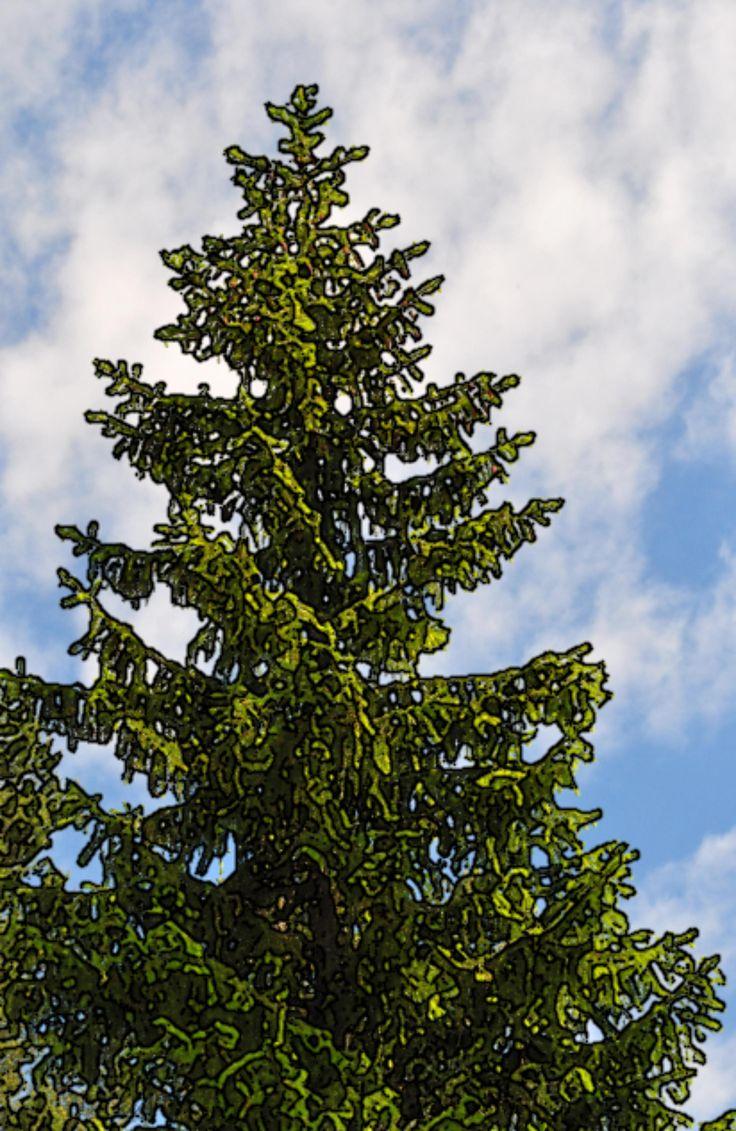 Contoured pinetree.