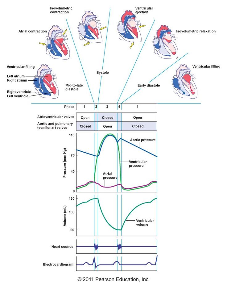 Cardiac Cycle-what im doins in class now 09/08/2014