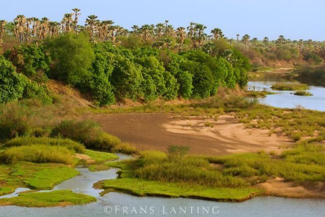 Parque Nacional Niokolo-Koba en el sureste de Senegal declarado Patrimonio de la Humanidad y Reserva de la Biosfera en 1981 y en peligro desde 2007. Por este parque pasa el río Gambia donde habita una abundante fauna africana como leopardos, babuinos, elefantes, leones, hipopótamos, y endémicos elands gigantes occidentales. Tiene una superficie de 9.130 Km². https://www.youtube.com/watch?v=MGJSLCp3ZWU Elijo este Parque porque es una de las áreas protegidas más grandes en el oeste de África