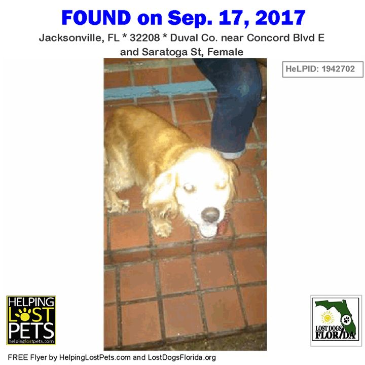 Do you know this Dog?   CONTACT dehop44@gmail.com Phone: (904) 891-6520  #Jacksonville (Concord Blvd E & Saratoga St Female)  #FL 32208 #Duval Co.  #Dog 09-17-2017! Female #CockerSpaniel Mix Yellow / Brown/Found dog after hurricane #Irma unchipped.   More info photos dog's location on the HeLP map or to message finder: http://ift.tt/2fhhtlP  Let's get this dog home! #lostdogsflorida  #HelpingLostPets