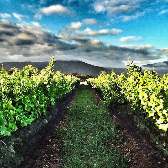Bramon Wine Estate