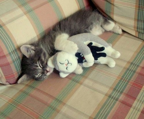 kitty with stuffed kitty