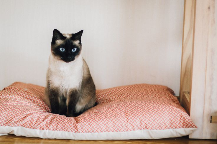 Coussin de sol pour chat — La Mouette