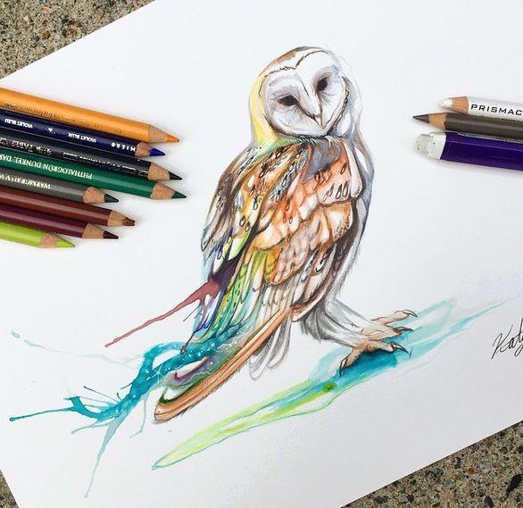 Owl draw