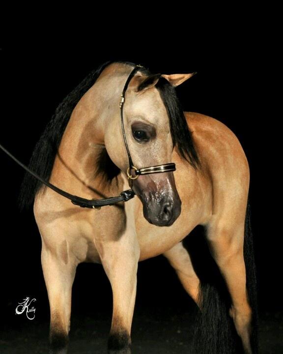 EquusXpress, Art & Photography  Miniature horse