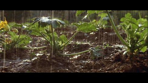 Jean de Florette é um filme francês de 1986 dirigido por Claude Berri e estrelado por Yves Montand e Gérard Depardieu.  O filme se passa na França, em 1920. Na disputa por uma nascente abandonada, o dono da terra morre e uma imponente família rural tenta enganar seu herdeiro, bloqueando a nascente para que este não possa usá-la, sendo forçado a vendê-la por um baixo valor.