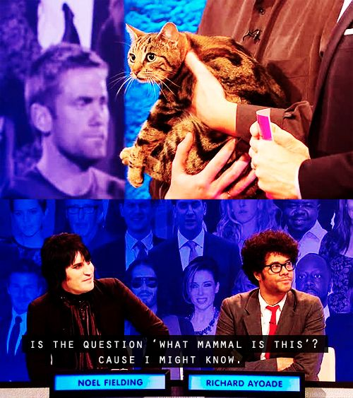 "When Noel Fielding and Richard Ayoade tried to guess the question ahead of time. | 27 Times ""The Big Fat Quiz Of The Year"" Made You Literally LOL"