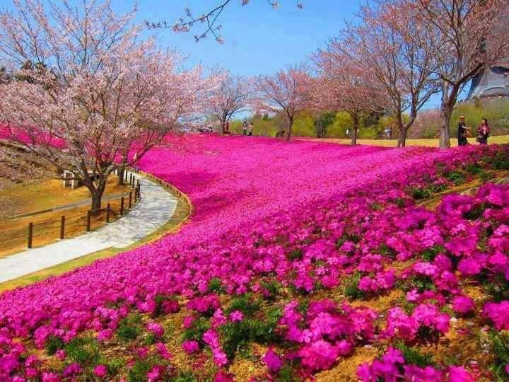 Gardens in Pink and Purple