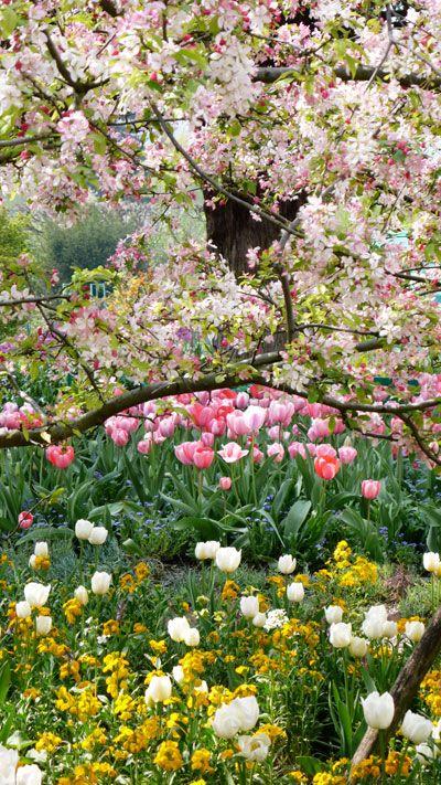 Printemps au jardin de Monet à Giverny