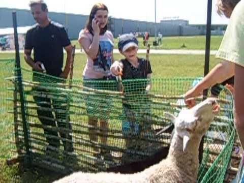 Контактный зоопарк| выезжаем, привозим животных!