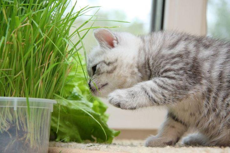 Витамины, средства и добавки против выпадения шерсти у кошек - причины и лечение    EcoDobavki