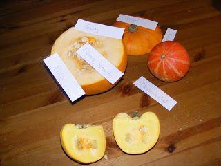 Homeschool Escapade: Pumpkin Trays