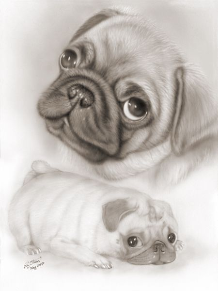 25+ best ideas about Pug pictures on Pinterest | Cute pug ...