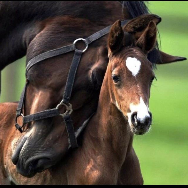Mommy love: Snuggles, Mothers Love, Baby Horses, Foals, Heart, Sweets, Beautiful Hors, Ponies, Baby Animal
