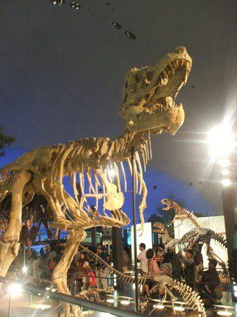 Visit Fukui Dinosaur Museum, Fukui prefecture