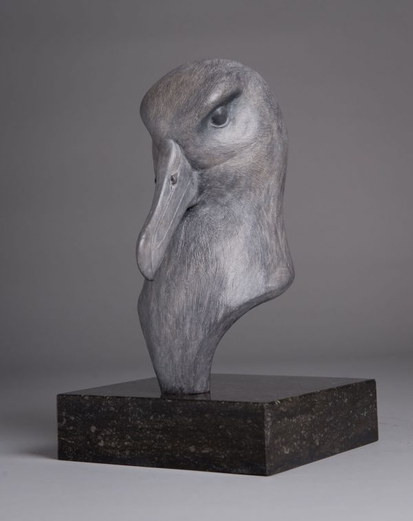 #Bronze #sculpture by #sculptor Anthony Smith titled: 'Black-browed Albatross bust (Sea Bird atatuette)'. #AnthonySmith