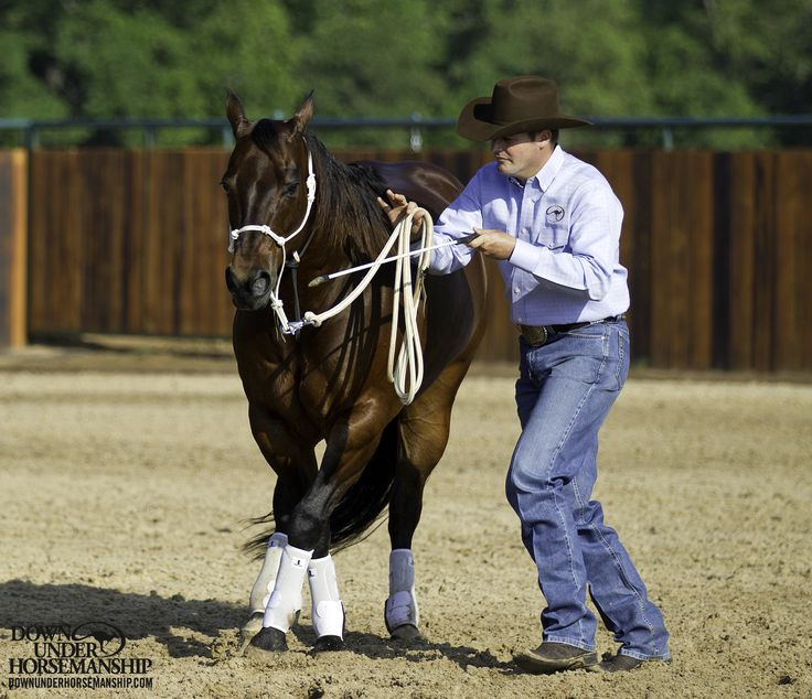 Groundwork Exercise #4: Leading Rollbacks  Goal: To have the horse lead up beside you and stop when you stop, back up when you back up, and pivot on his hindquarters to do a 180-degree turn to either the outside or inside when you change directions. Your horse should be like your shadow, never getting in front of you or behind you.  Learn more https://www.downunderhorsemanship.com/Store/Product/MEDIA/D/254/