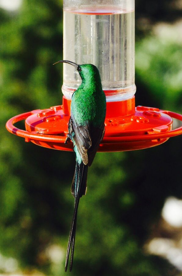 how to make a sunbird feeder