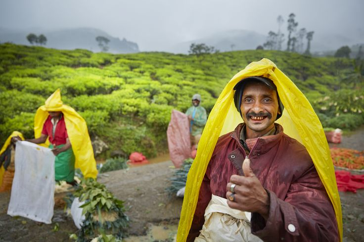 Day 4 of the photo tour - Workers high on betel nut near Nuwara Eliya tea plantation Sri Lanka.