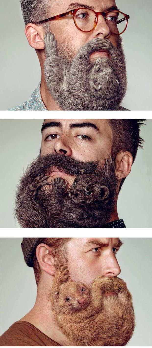 My beard is fluffy )) more hilarious pics on http://pics-for-fun.com/