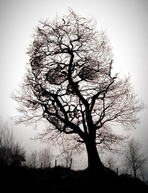 Tree of Death
