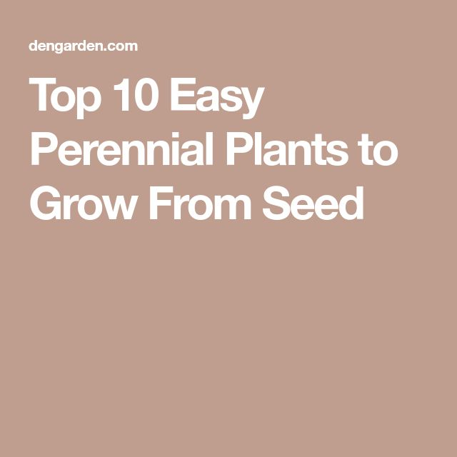 Top 10 Easy Perennial Plants to Grow From Seed