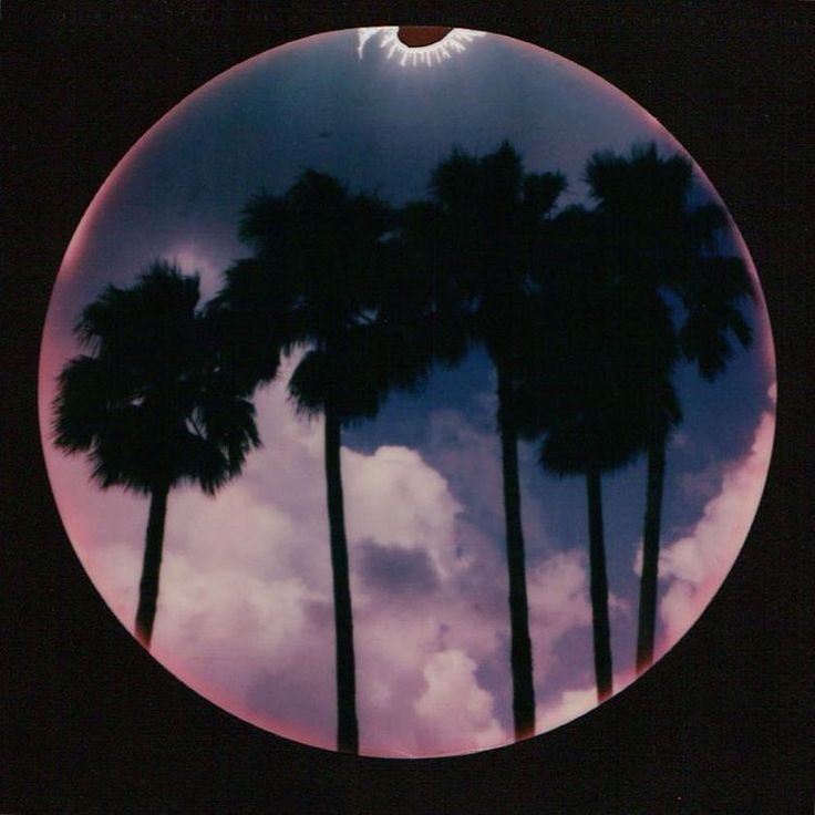 """""""First palm tree of the #ImpossibleRoadShow #Orlando #Colour600 #SLR680 #circleframe #impossible_hq"""""""