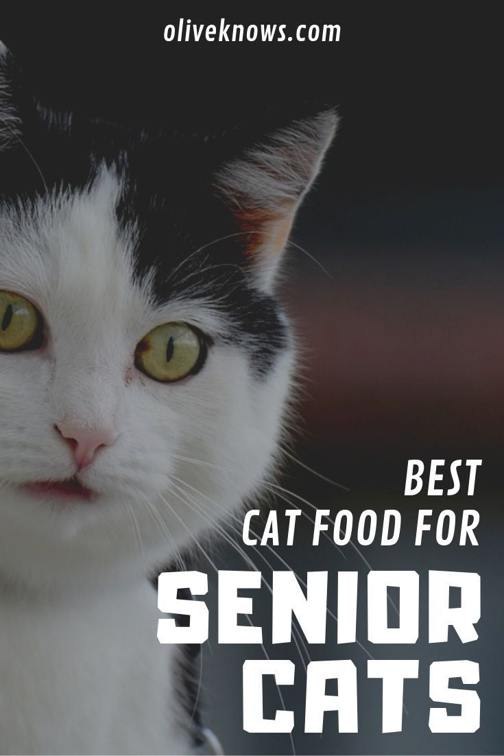 Best Cat Food For Senior Cats Wet And Dry Food Senior Cat Best Cat Food Cats