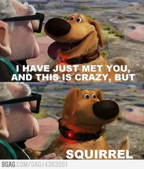 Call me, maybe... Squirrel!