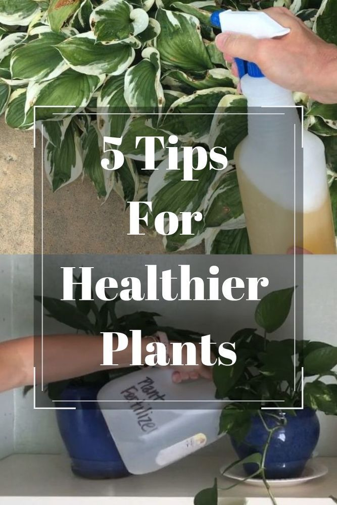 5 Tips For Healthier Plants Plants Healthy House Plants