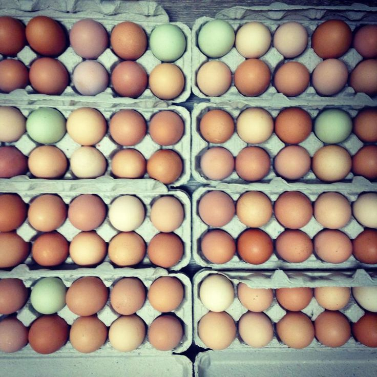 Do you know which color eggs are healthiest? What about which labels to look for (and which ones to ignore)? The answers might surprise you...