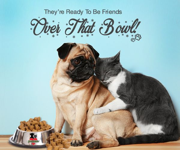 Your Pets Perfect Bowl Of Nutrition Happiness Is Perrousa Order 336 645 9365 Www Perrousa Com Petfood Food Animals Dog Upset Stomach Pet Food Delivery
