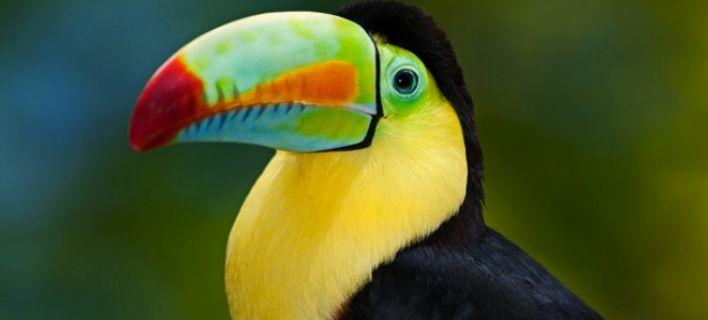 Δείτε τα ομορφότερα πολύχρωμα και σπάνια πουλιά του κόσμου [εικόνες]