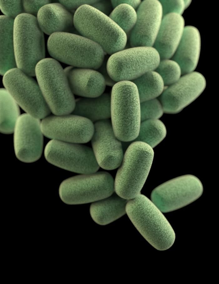 This illustration depicts a three-dimensional (3D) computer-generated image of a cluster of barrel-shaped Clostridium perfringens bacteria. The artistic recreation was based upon scanning electron microscopic (SEM) imagery.