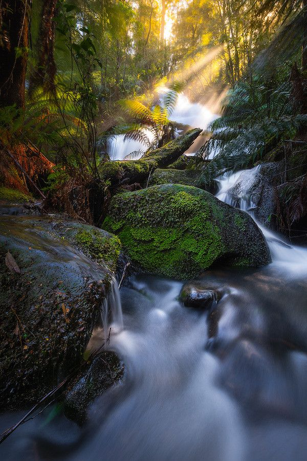 Triplet Falls, Great Otway National Park, Victoria. Triple Beams by Dylan Gehlken on 500px