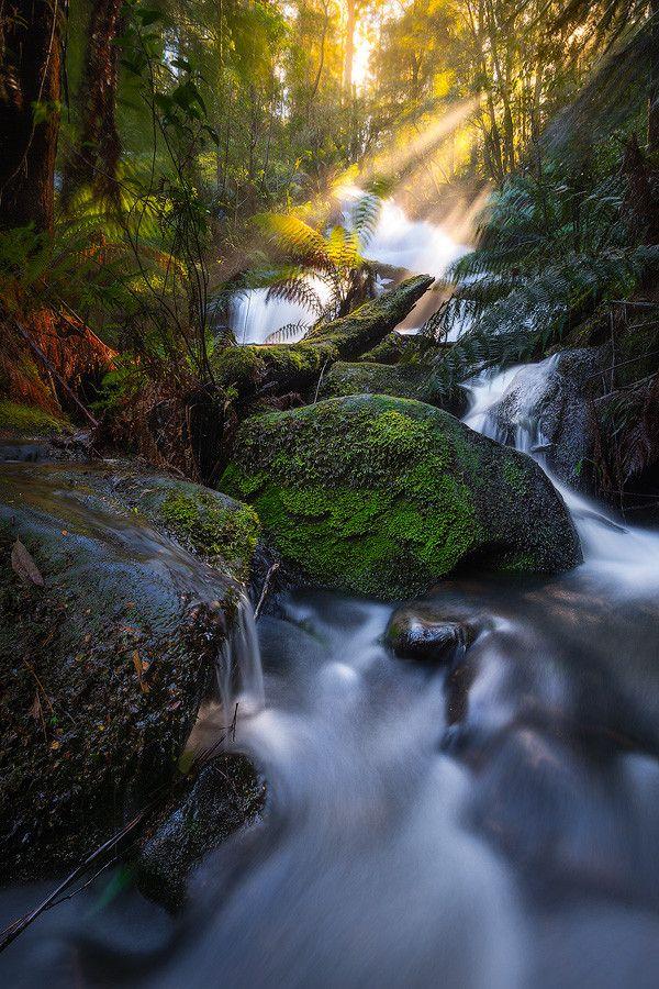 Triplet Falls, Great Otway National Park, Victoria. Triple Beams by Dylan Gehlken on 500px